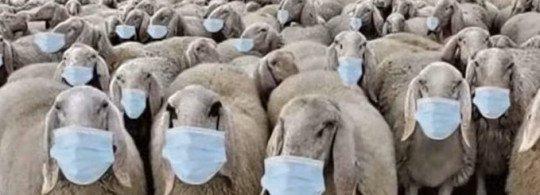 Las Mascarillas son un Fraude: Más de 100 Estudios Científicos y Décadas de Investigación Demuestran que NO Impiden la Transmisión de Viruses.