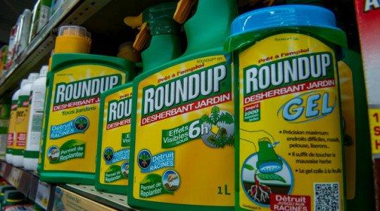 En Estados Unidos, otro Revés para Bayer, la Justicia Confirma que el Roundup Causa Cáncer